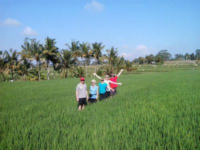 rice padi 2
